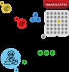 Agência Brasil explica: como é o transplante de órgãos no Brasil